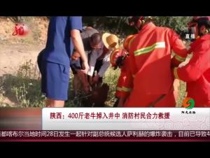 陕西:400斤老牛掉入井中 消防村民合力救援