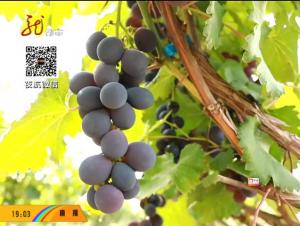 庆安:打造生态美景 助力乡村振兴