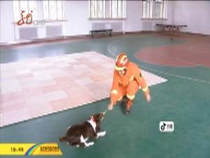 搜救犬:特殊的消防员