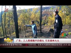 广东:三人吸烟随手扔烟头 引发森林大火