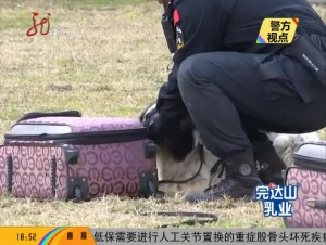 警方视点《警犬在行动》