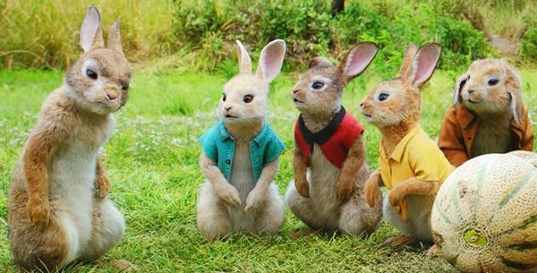 《比得兔》兔子乱斗频出表情菜园家族制霸农怪招包老大余罪图片