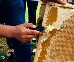 大兴安岭松岭区蜂蜜收割季 湿地小镇甜蜜飘香