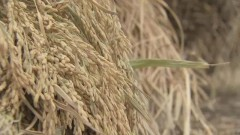 春华秋实再行动 助力农民增产增收