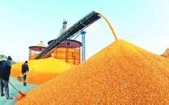 """收储""""优质难优价"""" 稻米市场""""产业病""""丛生"""