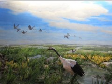 """一路向东""""赏湿地观候鸟 游界江品民俗"""" 双鸭山生态自驾游体验活动完美落幕!"""