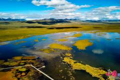 【中國夢·黃河情】若爾蓋多措并舉優化濕地生態系統 保護黑頸鶴家園