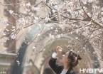 哈尔滨街头桃花盛开 美女赏花成靓丽风景线