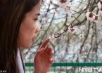 哈尔滨工程大学杏树林花开浪漫满分 树下满是拍花人