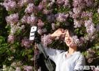 哈尔滨丁香公园10万株丁香怒放 成最美摄影地(组图)