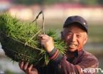 又到一年插秧时 黑龙江农村地区开始种植水稻