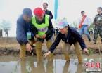 黑龙江通河2017人齐插秧创吉尼斯世界纪录