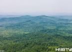 黑龙江省方正县双子山原始森林公园 夏日里美丽可人的天然氧吧