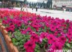 黑龙江:五彩花卉 扮靓冰城