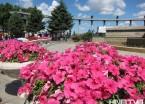 美丽花卉扮美哈尔滨 江畔广场种上数千株鲜花