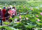 湿地公园荷花朵朵开 吸引众多市民游客