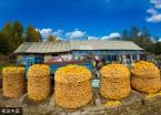 伊春:山区农家玉米囤(组图)