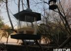 哈尔滨公园树枝挂鸟食 帮助小鸟过寒冬(组图)