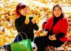 黑龙江:新季玉米价格将高开低走(组图)