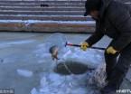 哈尔滨:市民松花江上凿冰冬捕 一网打上十多条大鱼(组图)