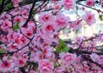 """哈尔滨一小区现人工""""春花"""" 春意盎然成靓丽风景线"""