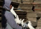 哈尔滨:天气晴好 市民索菲亚教堂前喂鸽子(组图)