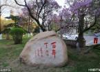 哈尔滨:丁香百岁花尤香(组图)