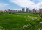 哈尔滨:城市湿地公园打造迷人之夏(组图)
