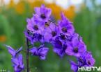 【图说龙江】铁力各式花朵争相绽放 昆虫花丛中翩翩飞舞 (组图)