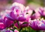 【图说龙江】盛开的芍药花