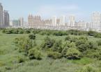 哈尔滨群力湿地水丰景美候鸟栖息 助力周边房价上涨