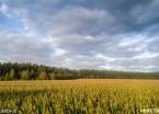 鸡西:秋色迎白露  北大荒景色美