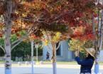 仲秋时节哈尔滨枫叶泛红 市民红叶下徜徉拍照成风景(组图)
