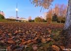 哈尔滨:龙塔之下落叶缤纷美景如画