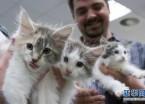 匈牙利举办宠物猫展(组图)