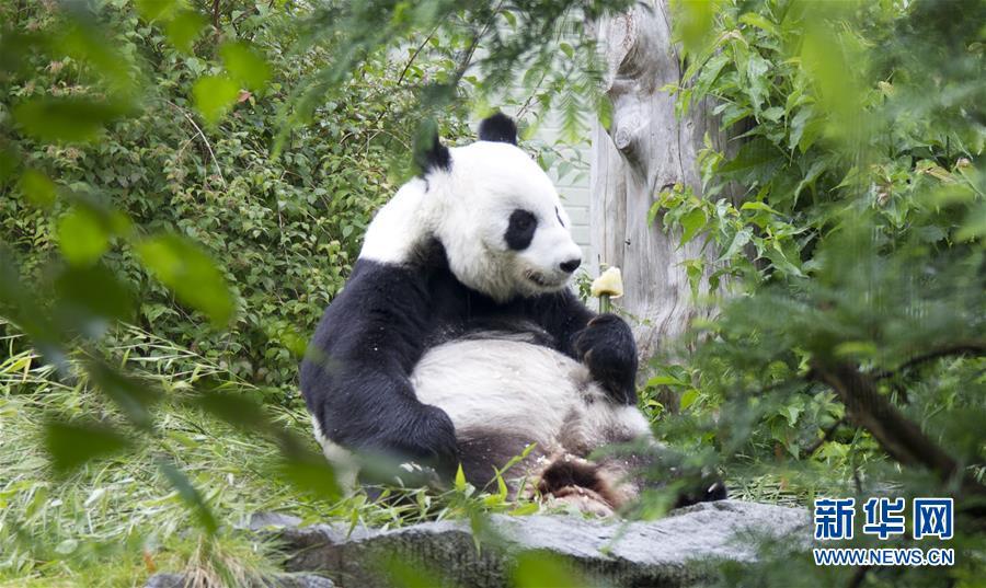 大熊猫——中欧友谊的使者