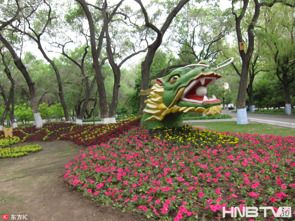黑龙江哈尔滨:五色草组成腾飞的巨龙(组图)