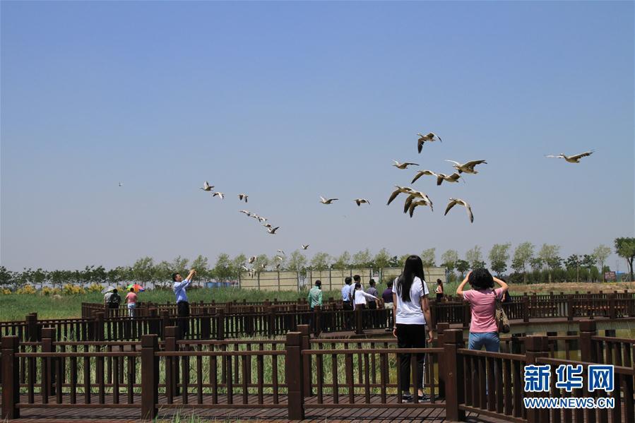 生态修复引候鸟 花园氧吧引游客