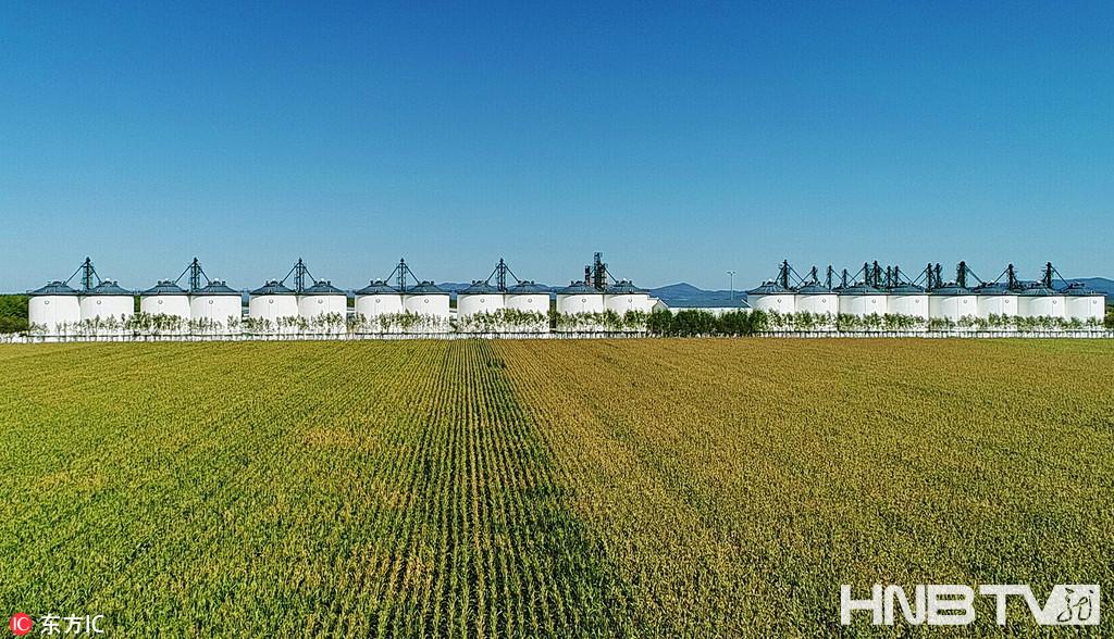 黑龙江三江平原再奏丰收曲 收割场面壮观