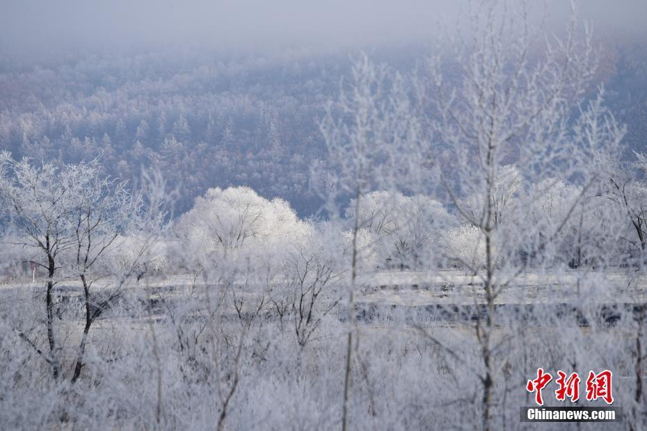 中俄界江两岸呈现雾凇美景(组图)