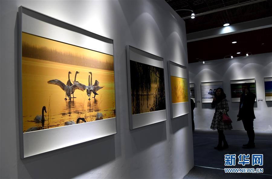 三门峡白天鹅·野生动物国际摄影大展开幕