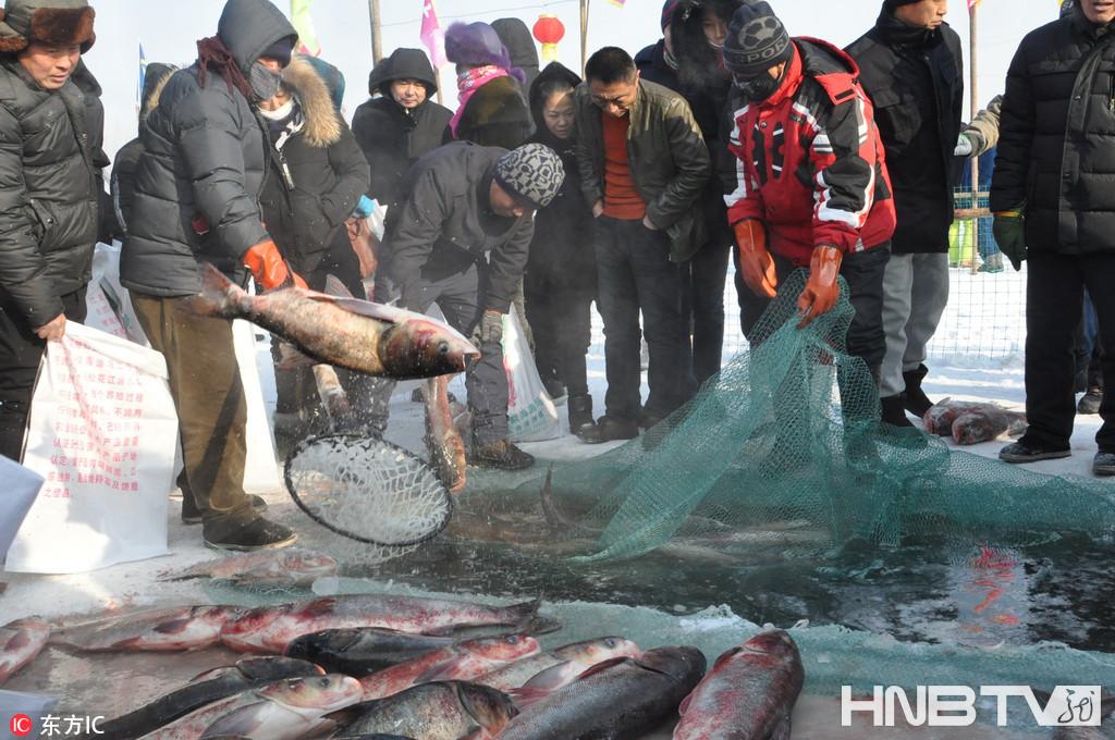肇东举行渔猎冬捕活动 大网捞出数千斤鲜鱼(组图)