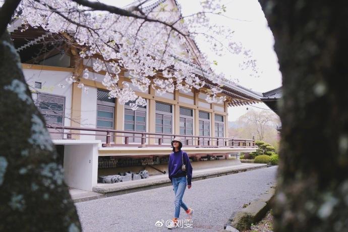 劉雯漫步櫻花樹下曬照 時尚活力浪漫清新展春意