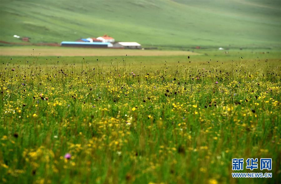 草原美景如画