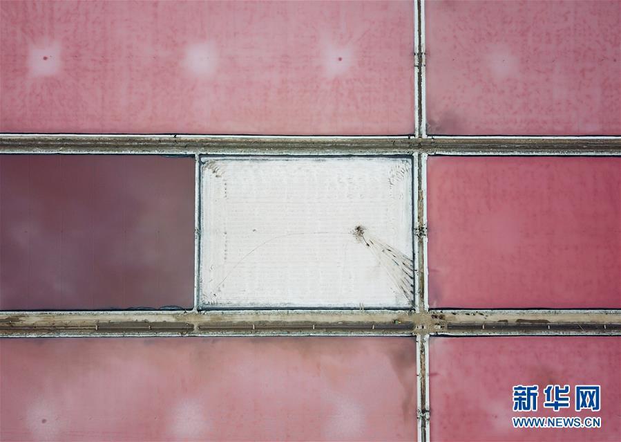 """江苏连云港:淮盐丰收""""秋扒""""忙"""