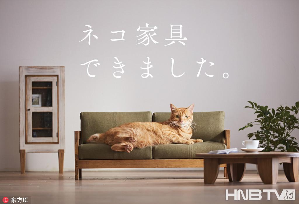 真心萌爆了! 日本大川推出猫咪专用迷你家具