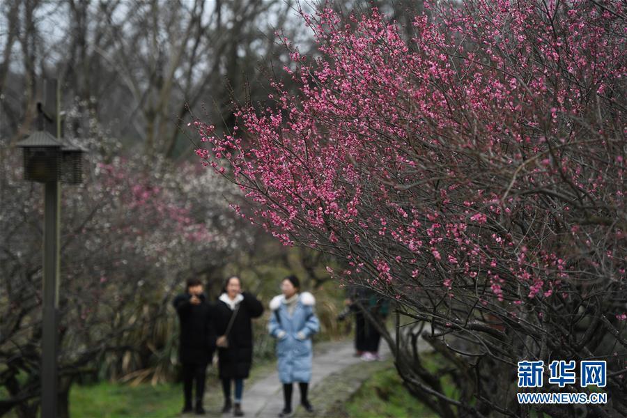 西溪湿地:早春时节 曲水寻梅(组图)