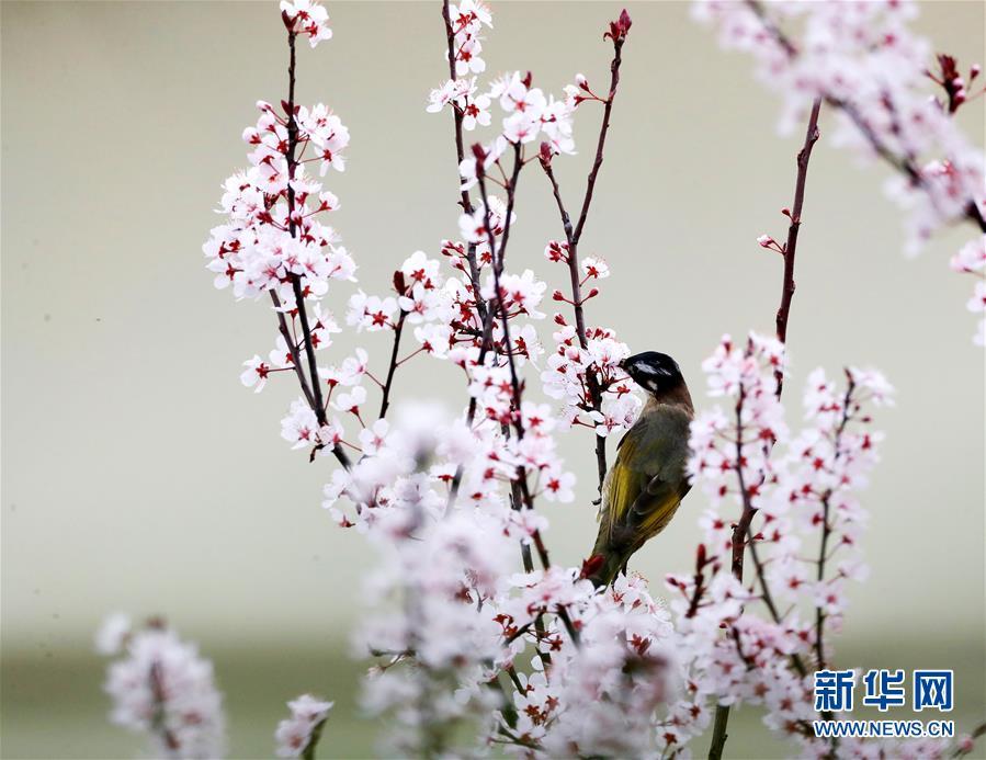 鸟语花香(组图)