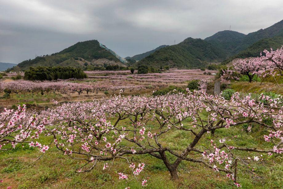 《在那桃花盛开的地方》原来唱的是这里