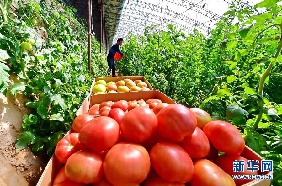 果蔬种植助增收(组图)